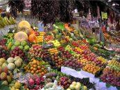 Insetos polinizadores ajudam a garantir segurança alimentar
