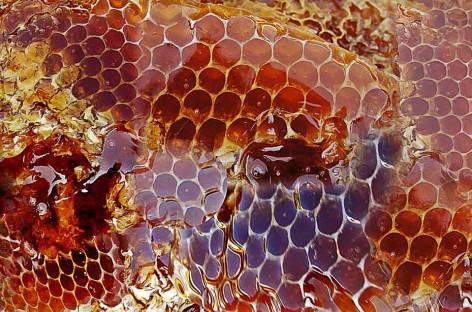 Unidade de processamento impulsiona produção de mel de São Domingos do Prata