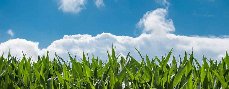 FAO recomenda que países apliquem modelo de agricultura sustentável