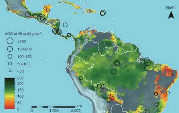 mapa-florestas-regeneradas