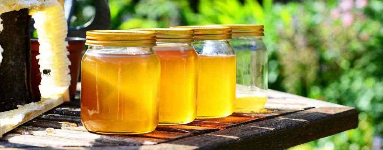 Seaprof conclui diagnóstico do mel em Jordão, no Acre