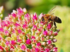abelha-flor-rosa-reduzida