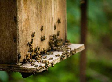 Seagro orienta apicultores sobre alimentação complementar para as abelhas