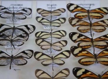 Pesquisa cataloga borboletas em Sergipe