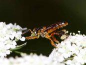Pesquisadores brasileiros lançam plataforma sobre biodiversidade e serviços ecossistêmicos