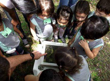 Projeto com polinizadores é apresentado em Belém