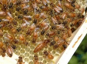 Epagri/SC inicia ações preventivas contra besouro que pode destruir colmeias