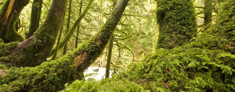 Mundo está mais verde hoje do que há 30 anos