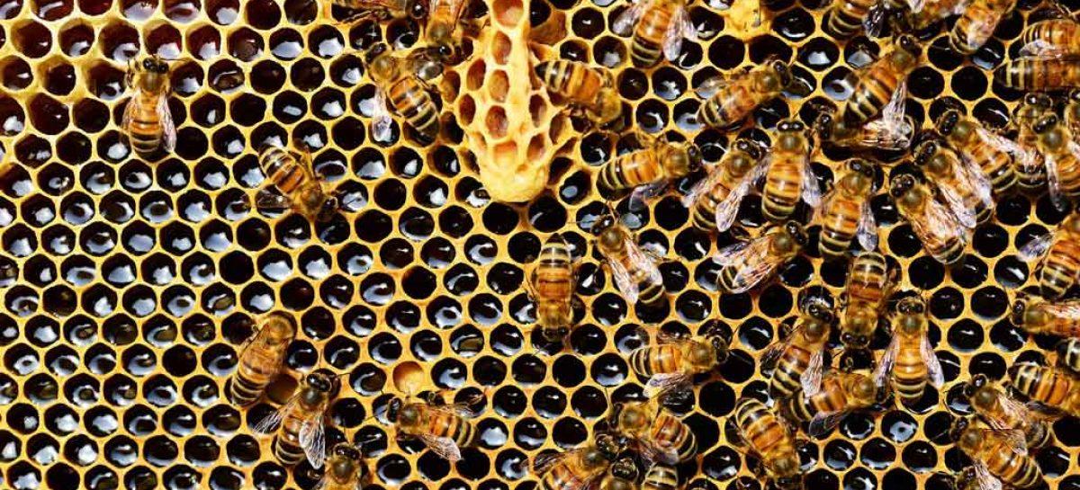 Crianças aprendem sobre produção de mel em Porangatu