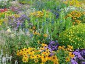 22 de maio – Dia Internacional da Diversidade Biológica
