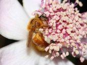 Revista NEO MONDO publica matéria especial sobre abelhas