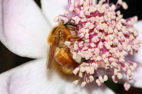 Biólogo desenvolve alimentação alternativa para abelhas sem ferrão