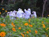 Fórum de apicultura em Dracena capacita produtores locais