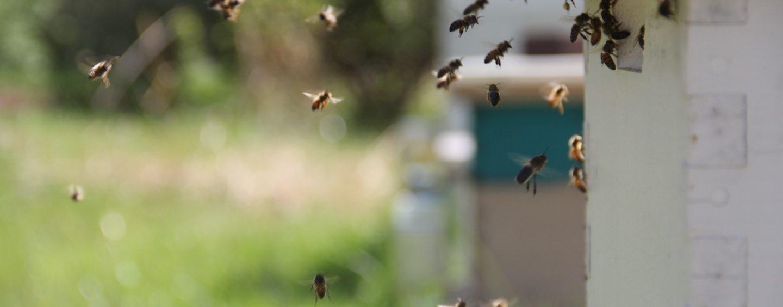 """UFGD cria """"hotel de abelhas"""" para conservar as espécies"""