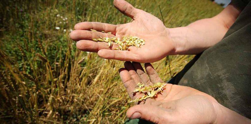 Ministros de América Latina e Caribe traçam rota rumo à agricultura sustentável