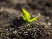 28 de julho – Dia do agricultor: os desafios e as oportunidades no campo