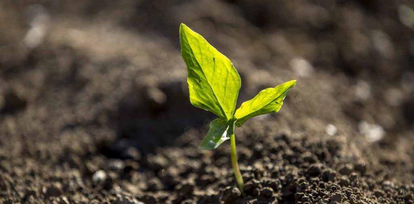 29ª RAIB vai abordar polinização e agricultura