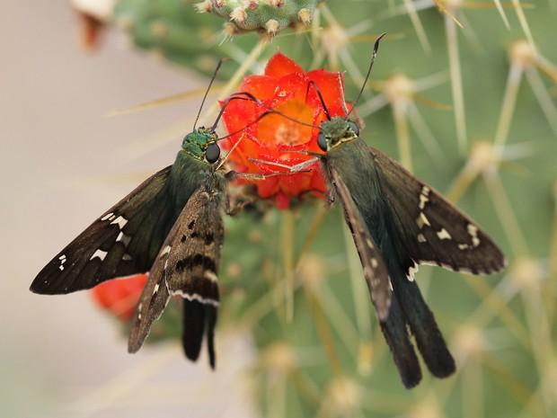 borboletas - Crédito Carlos Beserra Nobre