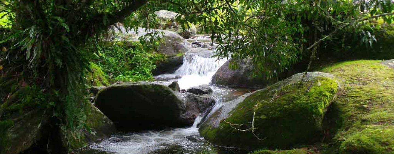 17 de julho – Dia da Proteção das Florestas