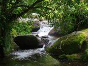 Perda de biodiversidade ameaça bem-estar das gerações atuais e futuras