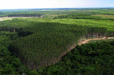COP22 – Brasil apresenta produção agrícola com mitigação de CO²