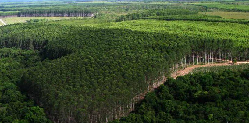 Brasil é um dos maiores produtores de florestas plantadas do mundo