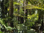 Florestas pobres em biodiversidade se tornam emissoras de gases de efeito estufa