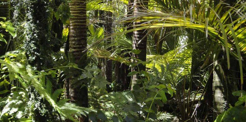 Pesquisa oferece novos subsídios para proteção da biodiversidade de florestas