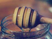 Família produz 300 litros de mel por ano com abelhas sem ferrão na PB