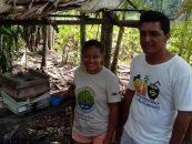 Instituto Peabiru relata prospecção em meliponicultura no Marajó