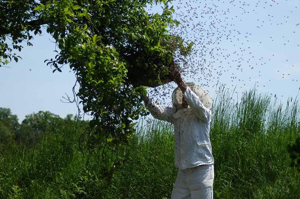 abelha-colmeia-red