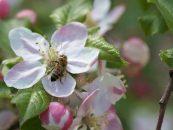 Mudanças no clima reduzirão abelhas no Brasil