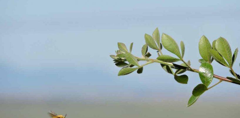 Estudo global aponta ameaças e soluções para conservação de polinizadores