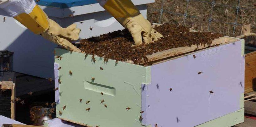 Programa SC Rural impulsiona a apicultura em Anitápolis