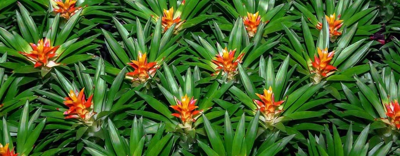 Abelhas e bromélias indicam importância da polinização para equilíbrio ambiental