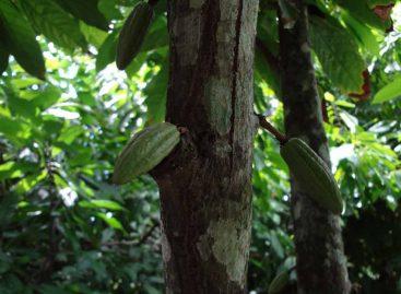 Agricultura sintrópica espelha funcionamento da floresta