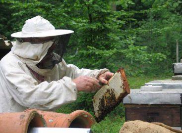 Técnicos e agricultores aprendem sobre manejo de apiários em Santa Catarina