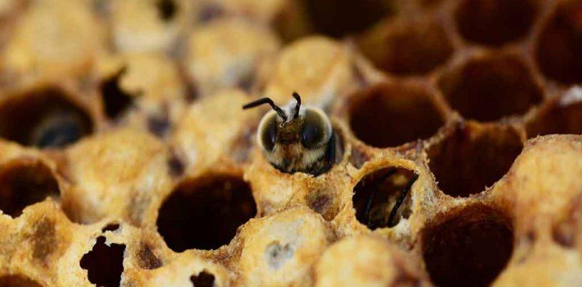 Pesquisa com abelhas entusiasma estudantes