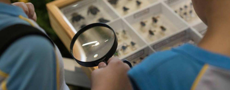 Desaparecimento das abelhas ameaça produção global de alimentos, alerta CGEE