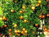 Estudantes desenvolvem sabão repelente para evitar inseticidas em pomares