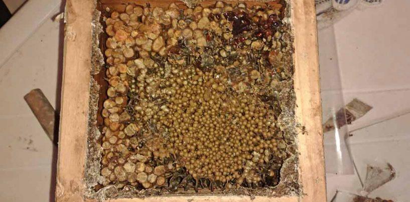 Alunos de Bauru (SP) mergulham no universo das abelhas