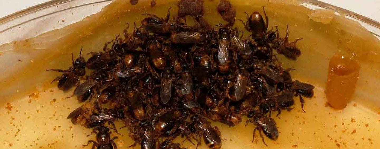 Instituto Biológico recebe curso sobre manejo de abelhas nativas sem ferrão