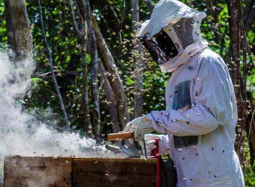 Município de Sergipe produz três toneladas de pólen por ano