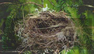 """Espécies de pássaros estão se """"divorciando"""" por causa do desmatamento"""