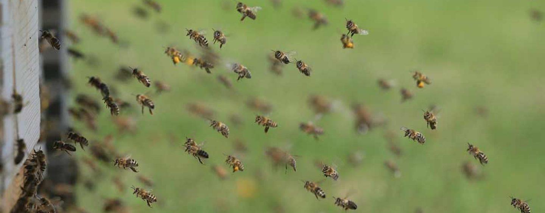 Cientistas chineses se inspiram em abelhas para dar forma a aviões