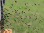 geoApis – Plataforma digital cria rede de apicultores e contribui para boas práticas no campo