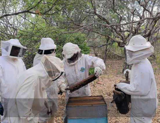 Produção de mel e peixe incentiva vivência no sertão