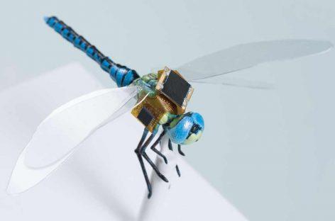 Empresa está transformando libélulas em ciborgues