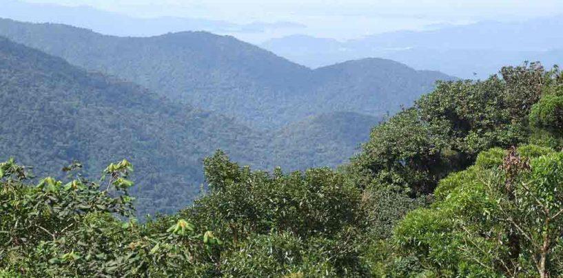 Mata Atlântica ainda preserva 28% de sua vegetação nativa