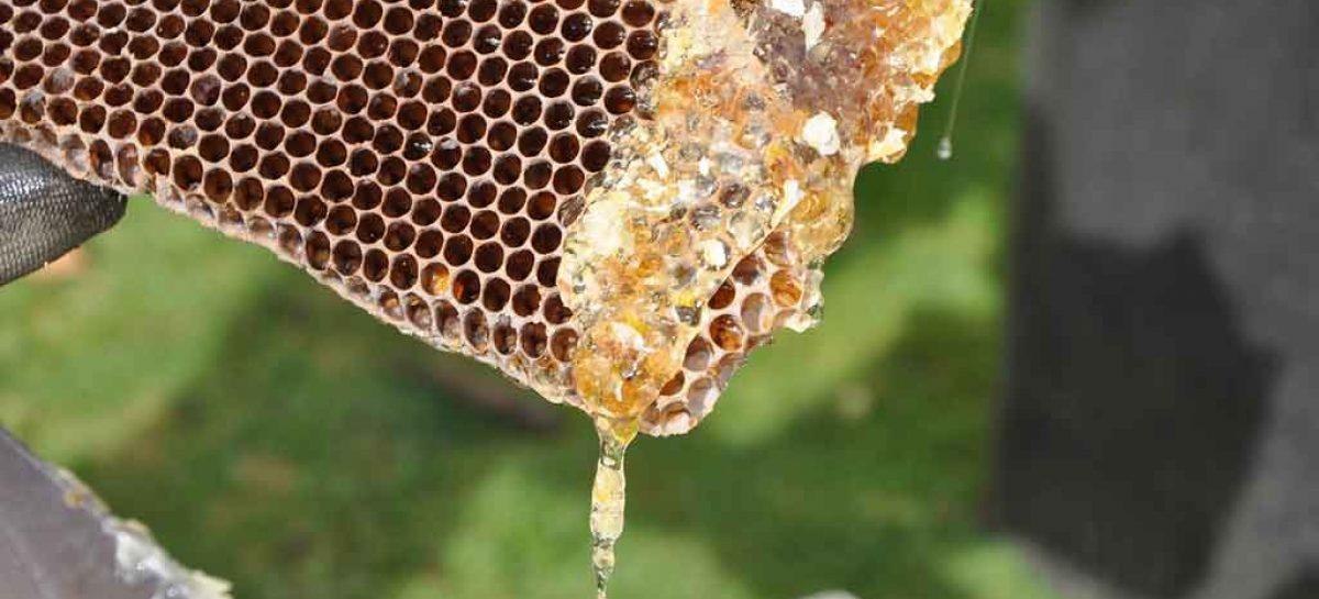 Produção de mel é fonte de renda para moradores do Sertão de PE